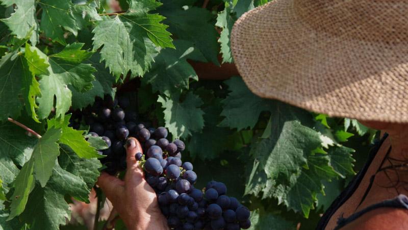 Italian Sceff vini liguri