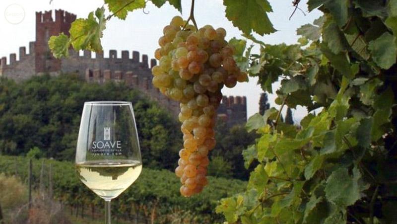 Italian Sceff vini veneti