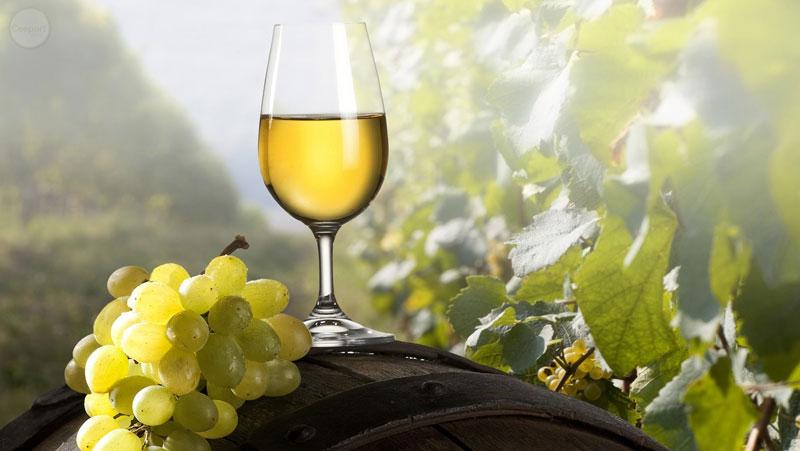 Italian-Sceff-vino-marche